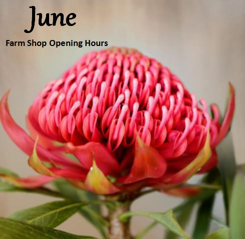 June Farm Shop Opening Hours
